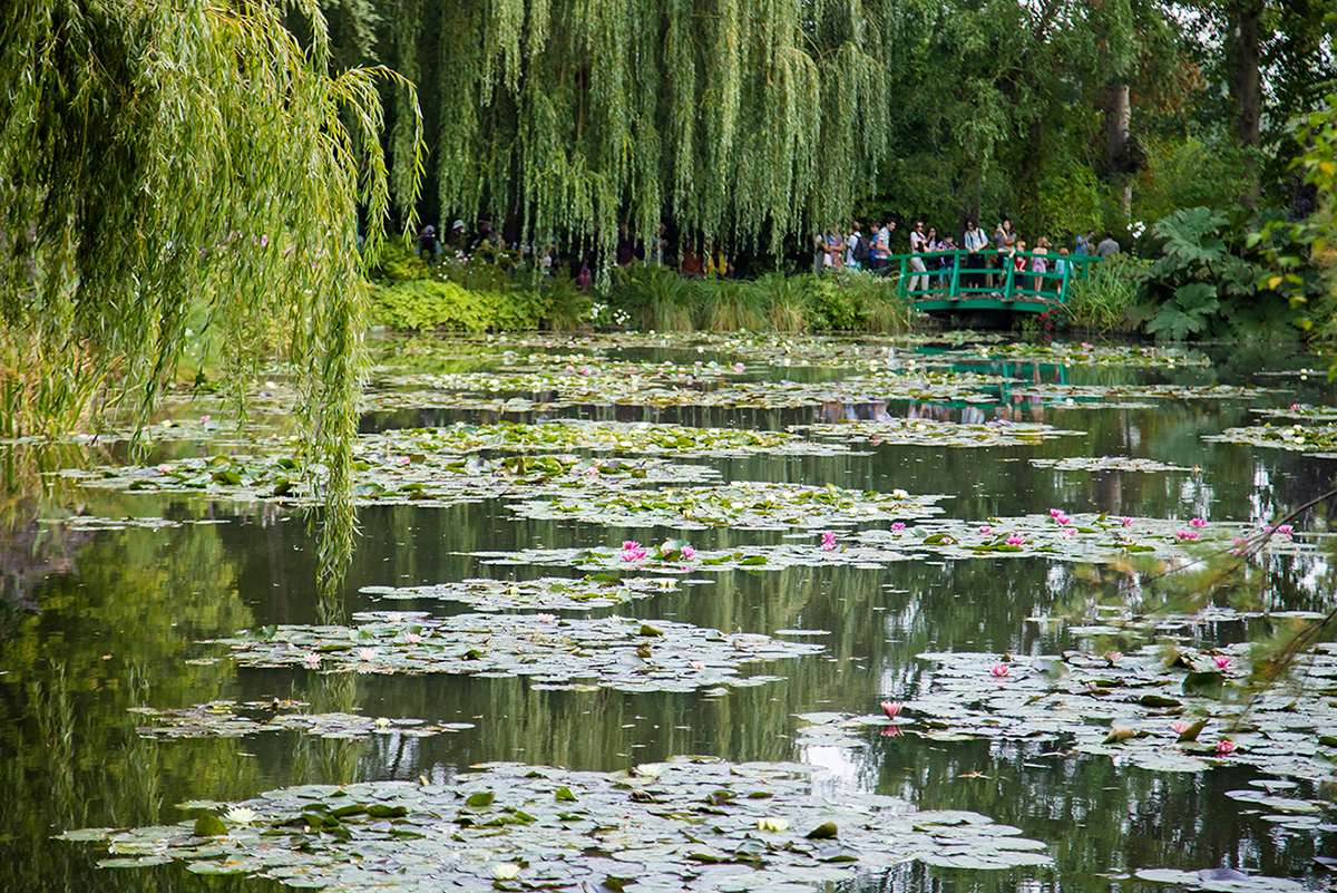 Water Lily Pond in Giverny