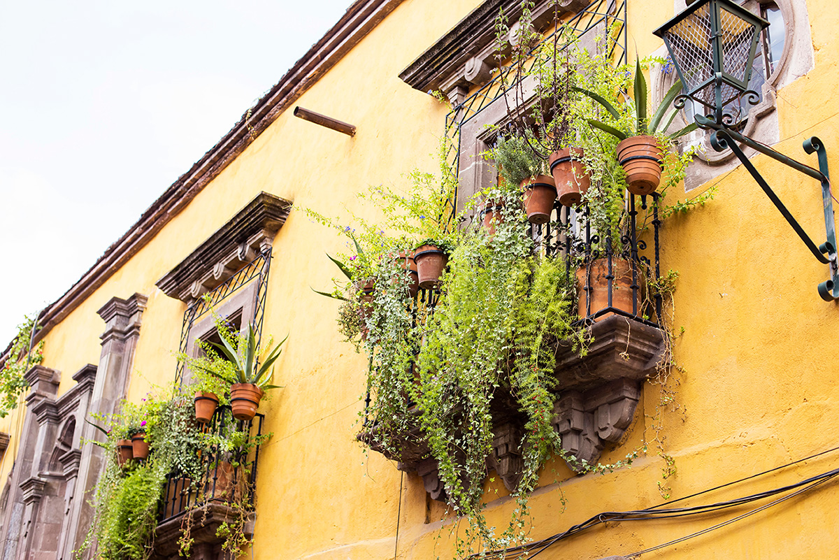 What to do in San Miguel