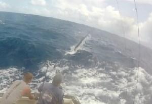 Port Stephens fishing