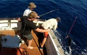 Striped Marlin fishing
