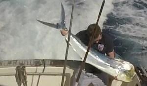 Mahi Mahi fishing charters