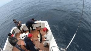 robs-yellowfin