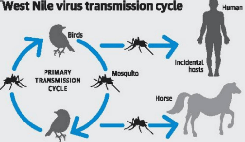 Spain reports first West Nile virus death in 2020