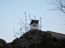 king of the ramparts