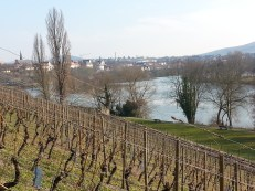 Saint Germaine vineyard in Aschaffenburg