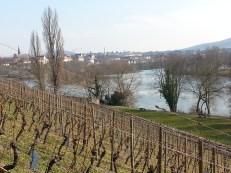 Saint Germaine vineyard in Aschaffenburg