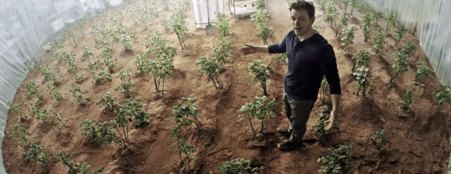 The martian potatoes