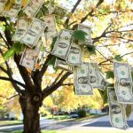 Tree with dollar bills flying off