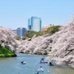 千鳥ケ淵・靖国神社のさくらまつり2017!桜の見頃や見所、混雑具合は?
