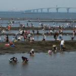 潮干狩り情報2018!千葉県木更津の中の島公園、金田海岸、金田見立海岸を紹介
