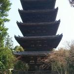 世界遺産・京都の仁和寺の魅力、京都の名勝・御室桜(おむろざくら)と紅葉の見ごろとは