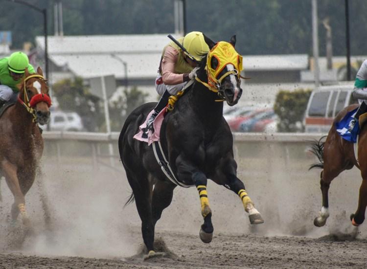 Foto Elliott León: LA Rapid King Judea, contendiente del Derby Garañones