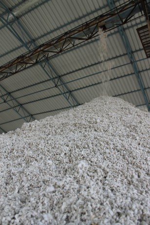 We visited a cotton mill. Here millions of cotton seeds are extracted from the cotton and then shipped to Gujarat where they will be transformed into cottonseed oil.