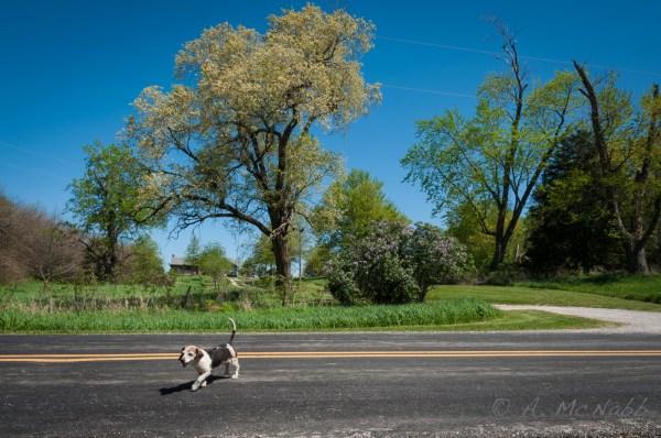 Gizmo on a walk