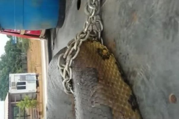 giant-anaconda-found-in-brazil