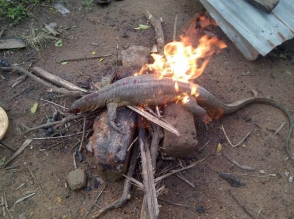 Big Monitor Lizard Killed In A Fish Farm 3