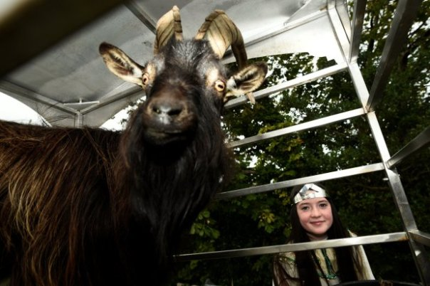 Goat Was Crowned King Of Small Town In Ireland (2)