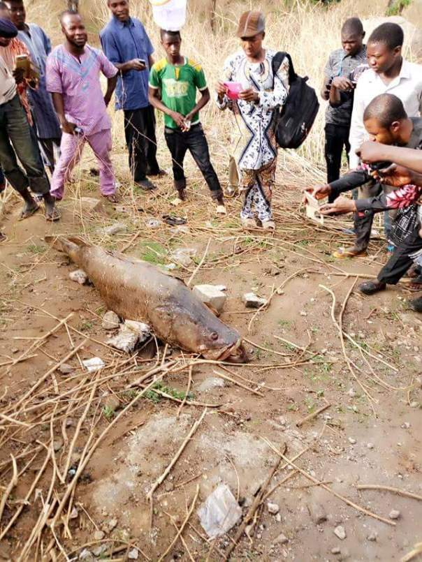 Dead Fish Found Along Mpape Road In Abuja (3)