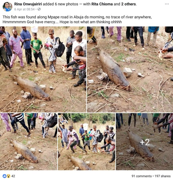 Dead Fish Found Along Mpape Road In Abuja (4)