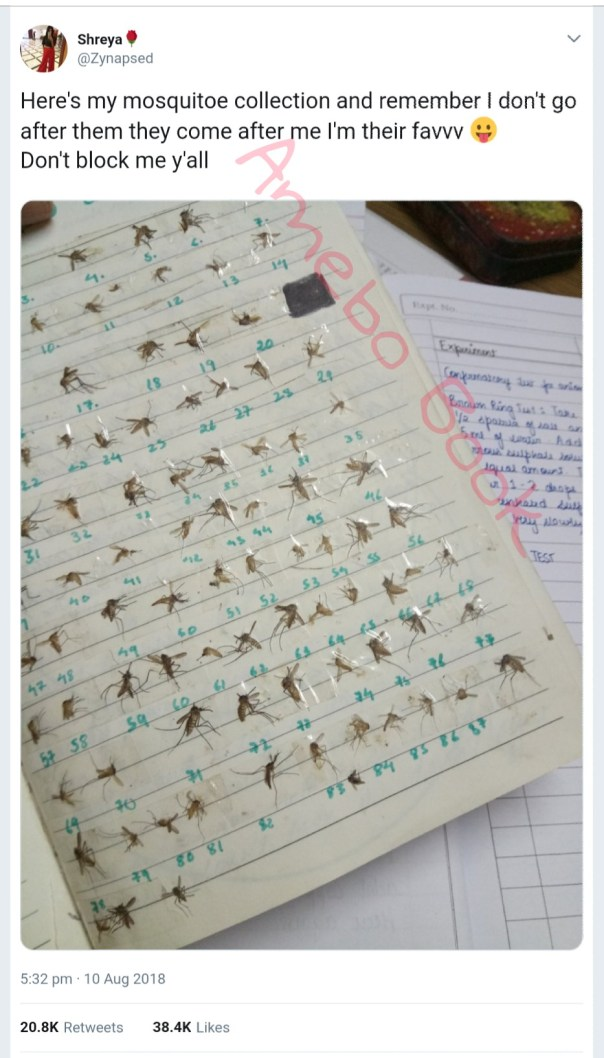 Lady Shows Off Her Mosquito Collection (2)
