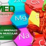 Podcast 101 AMED – La Importancia De Los Minerales En La Contracción Muscular