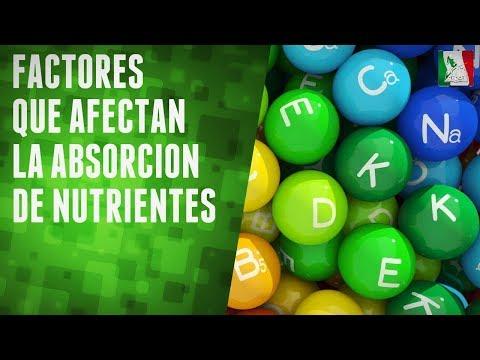 Factores que afectan la absorción de nutrientes