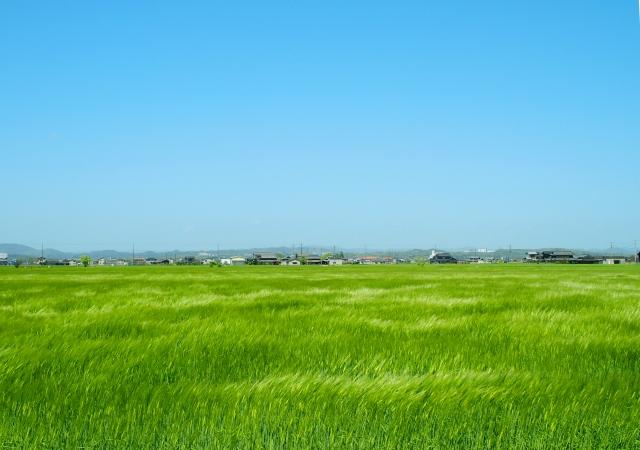美しい田んぼ