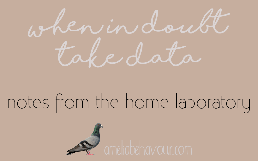 Notes from the home laboratory: When in doubt, take data!