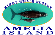 Amelia Right Whale Nursery