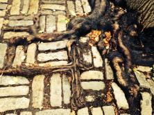 Roots in a New York Pavement