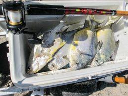 Amelia Island Fishing Reports 5