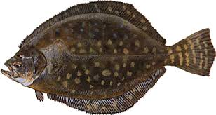 Amelia Island Fishing Reports 9
