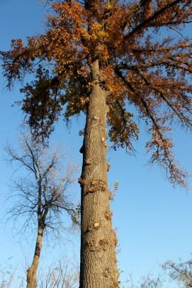 Feuille d'automne à Tachkent