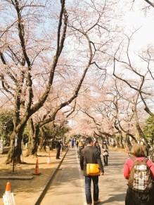 Allée des sakura au parc Yanaka
