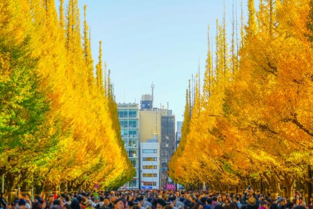 ginkgo - automne Japon