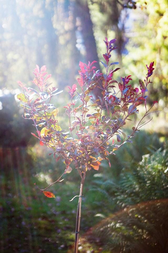 Höst i trädgården, höstrabatt, höstfärger.