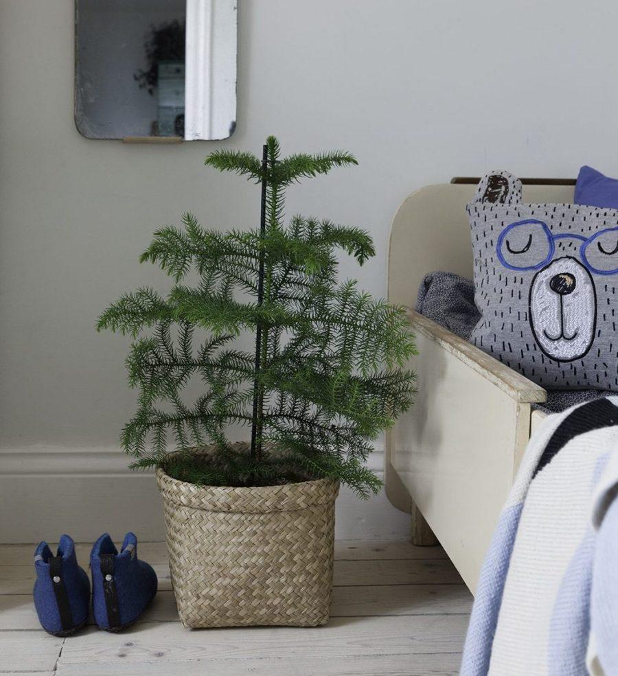 Amelie von Essen Amelies hus julpynt juldekoration liten gran rumsgran araucaria