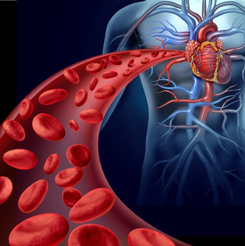 "Blood Circulation ""width ="" 498 ""height ="" 500 "" data-recalc-dims="