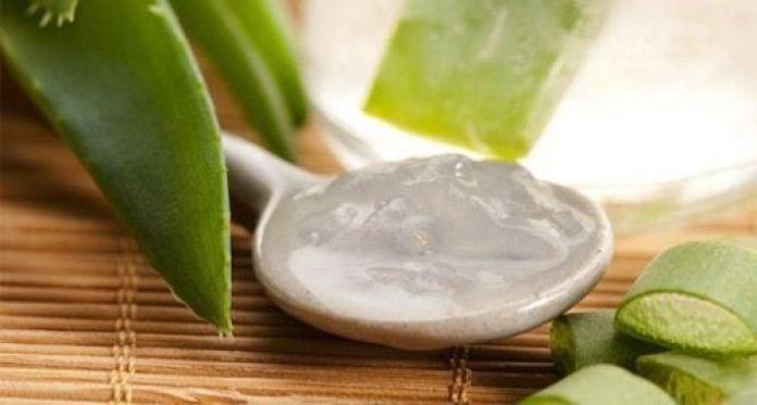 le gel d'aloe vera pour réguler le niveau de plaquettes