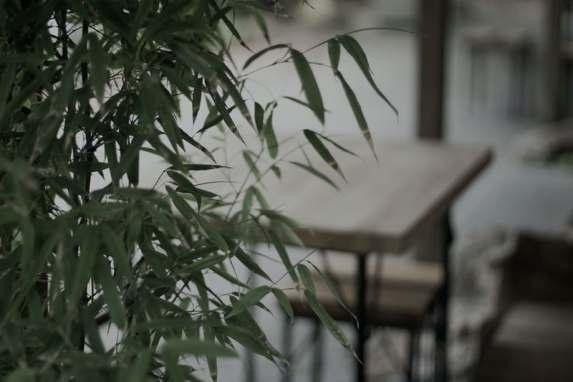 bambous en pot sur la terrasse