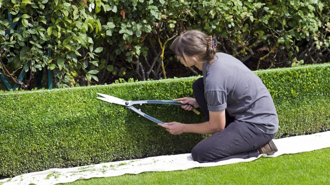 5 astuces pour un jardin facile d'entretien