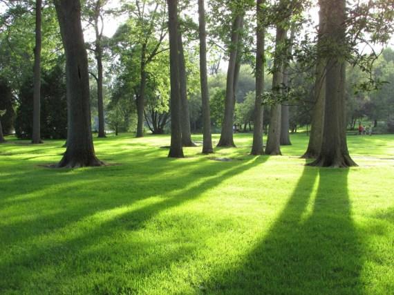 gazon sous arbres