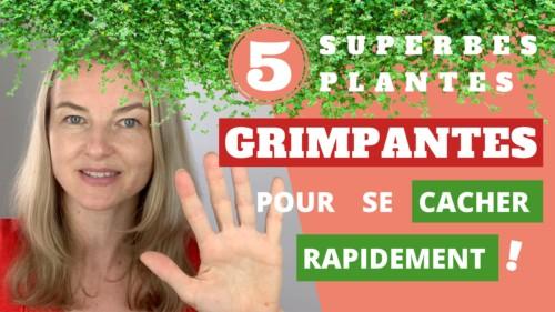 5 grimpantes pour se cacher