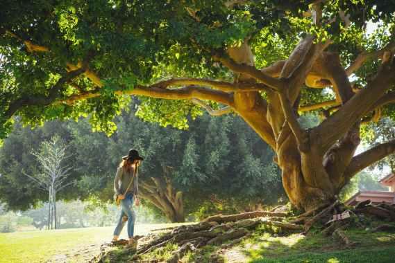 racines sous un arbre qui laissent peu d'espace pour les autres plantes