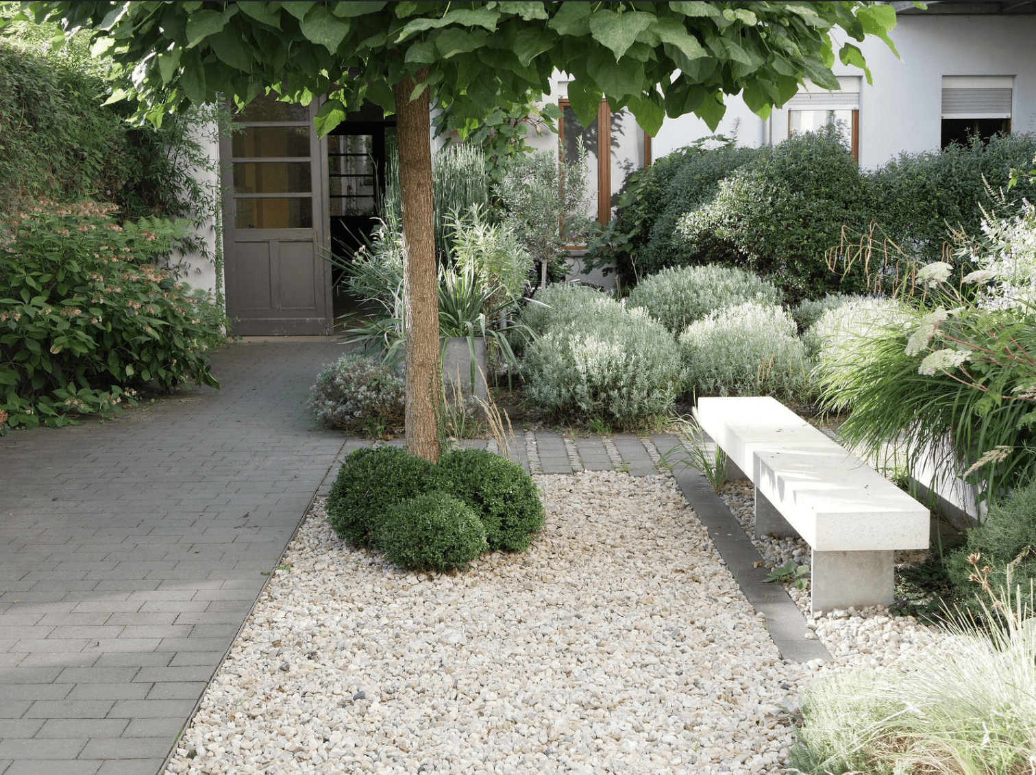catalpa boule nain, un petit arbre pour aménager un petit jardin