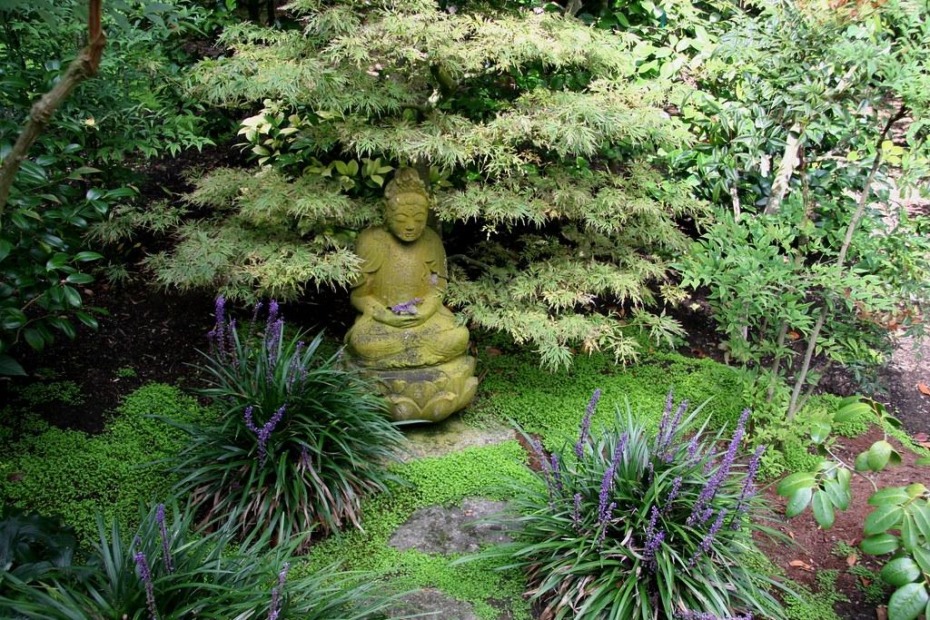 jardin sans allergies avec des mousses