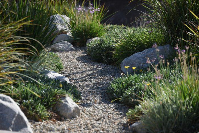 jardin sec avec des plantes grasses exterieur resistant au gel et des graminées