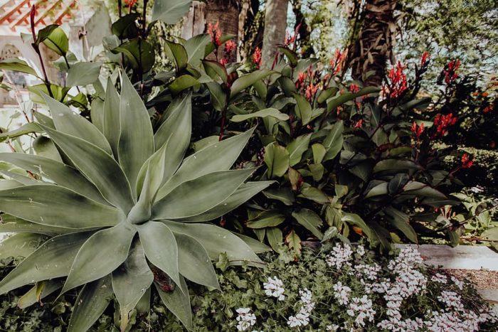 massif plante grasse exterieur agave non gélive avec plantes vivaces à fleur