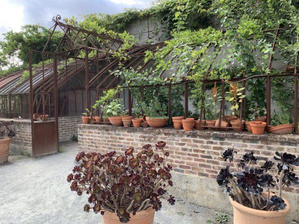 plantes grasses qui craignent le gel en pot à l'extérieur en décoration de jardin