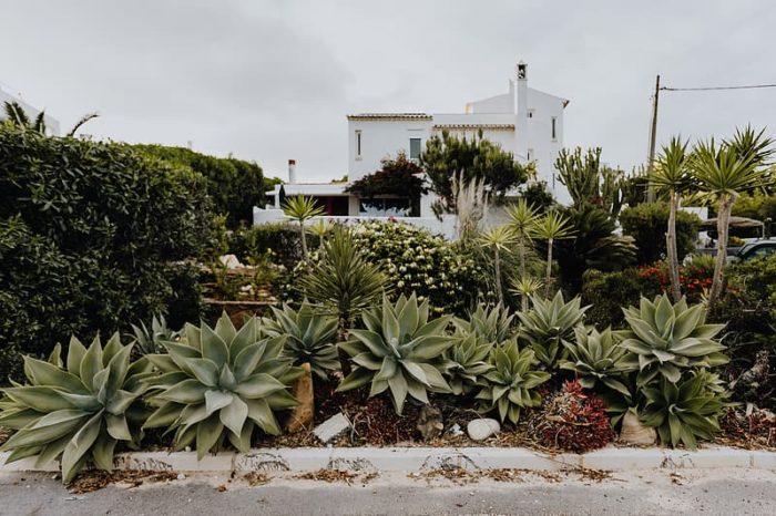 massif jardin sec d'agaves plantes grasses non gélives